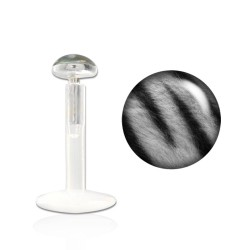 Piercing labret lévre 8mm zébré gris This LAB019